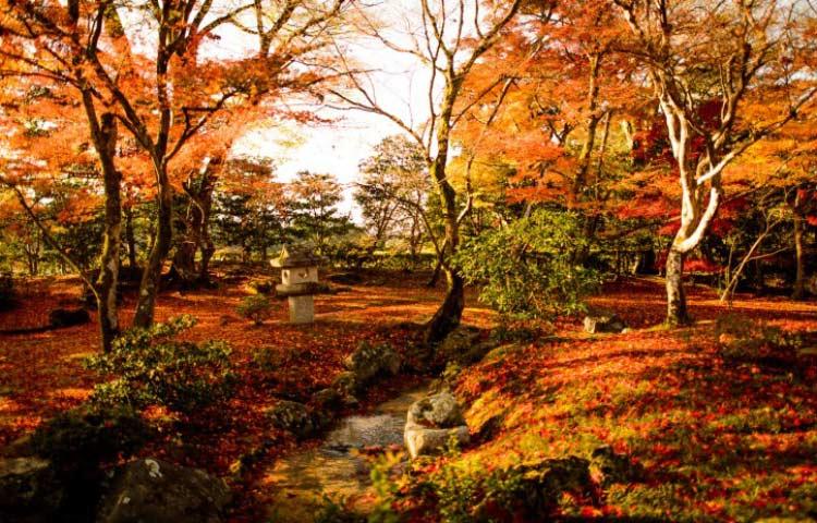 10 باغ ژاپنی زیبا