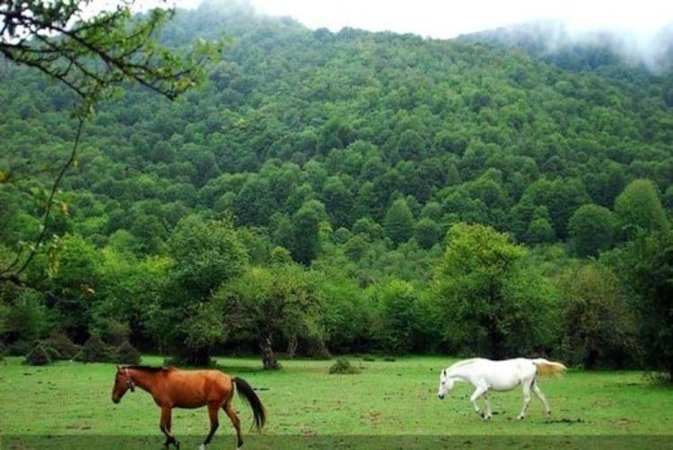طلای سبز ایران؛جنگل الیمستان
