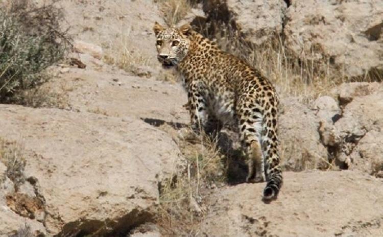پارک ملی ناشناخته بمو؛ زیستگاه هما و پلنگ ایرانی
