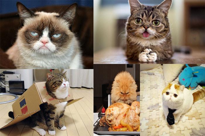 عکسهایی از جالبترین گربهها