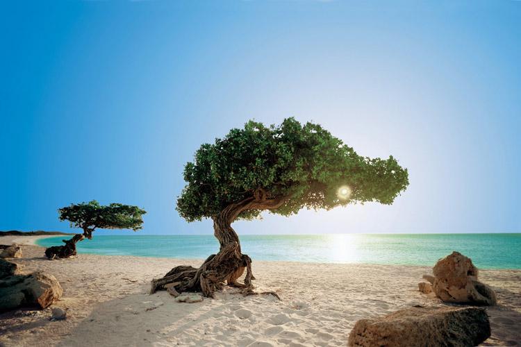محبوب ترین ساحل دریای کارائیب