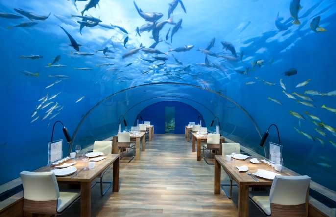 یک وعده غذا ، کیلومترها زیر آب