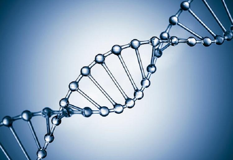 شکل هندسی DNA در تعیین خصوصیات انسانها موثر است