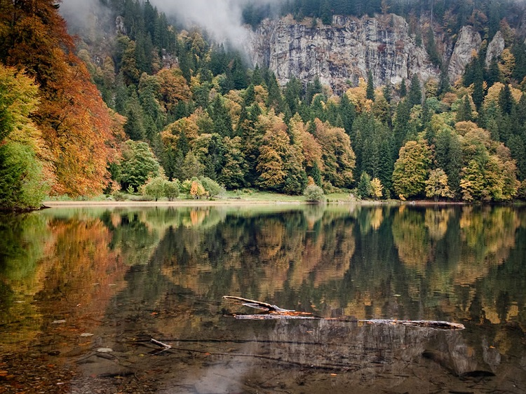 زیباترین جنگلها ؛ از جنگل سیاه آلمان تا آمازون