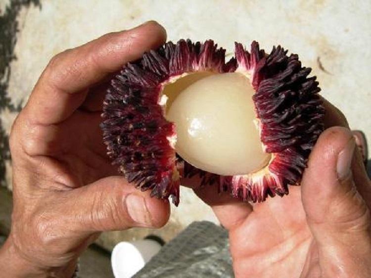 میوههای عجیبی که شاید هیچ گاه خوردنشان را تجربه نکنید!