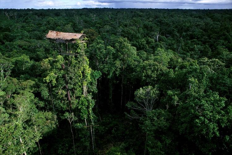 قبیله آدمخوارها در جنگلهای اندونزی