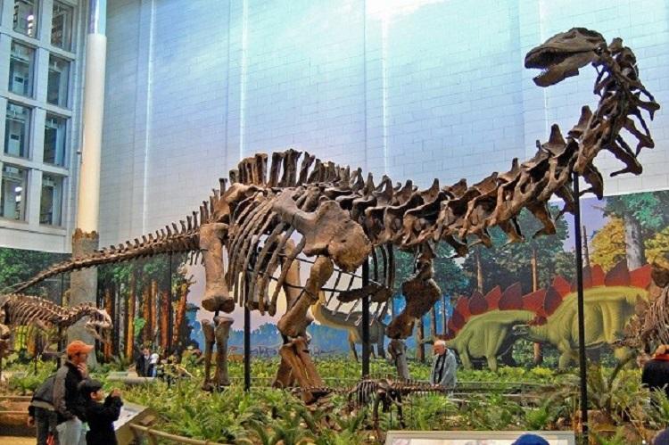 احتمالا شما نیز به این تصورات نادرست درباره دایناسورها باور دارید