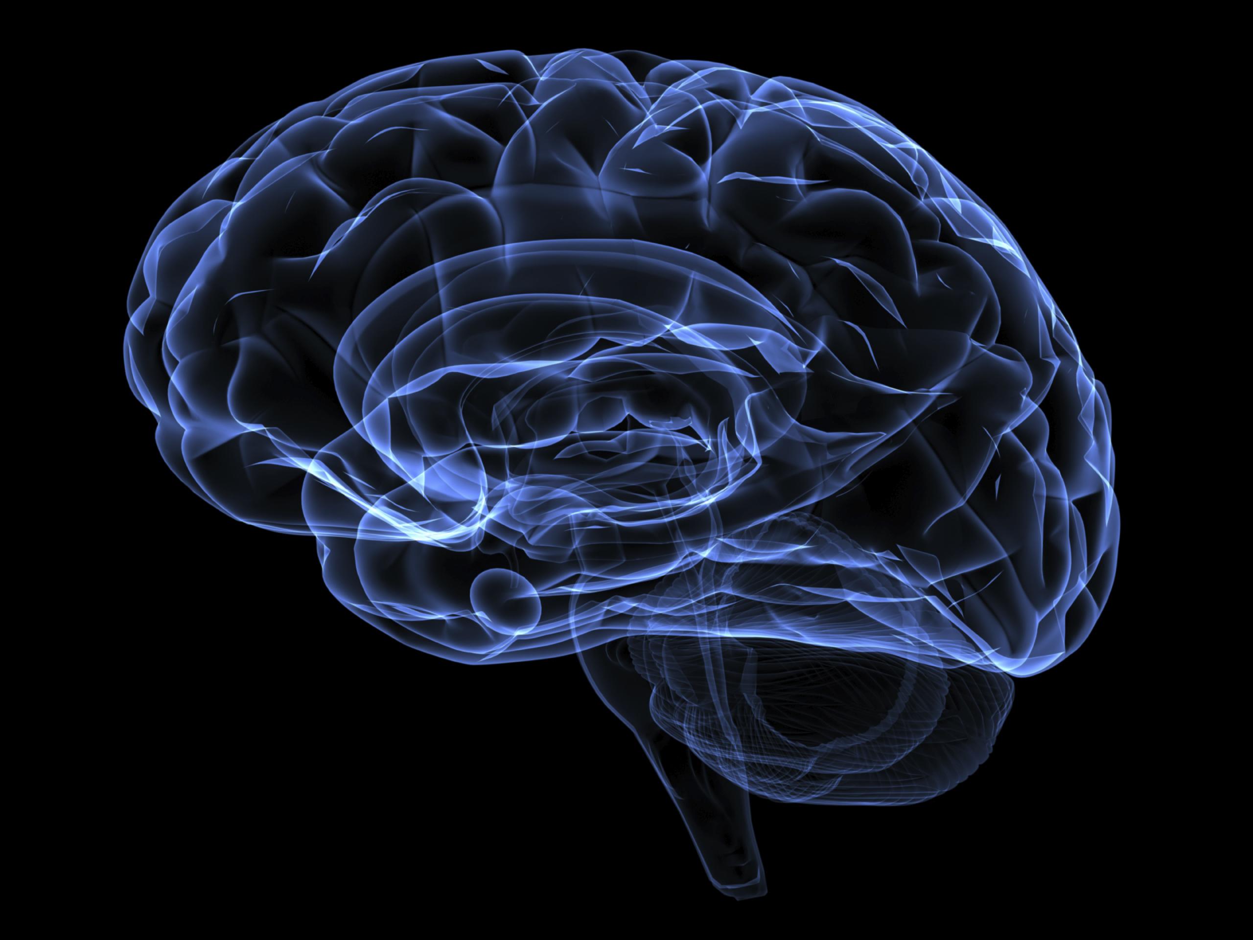 مغز انسان می تواند کل اینترنت را در خود جای دهد