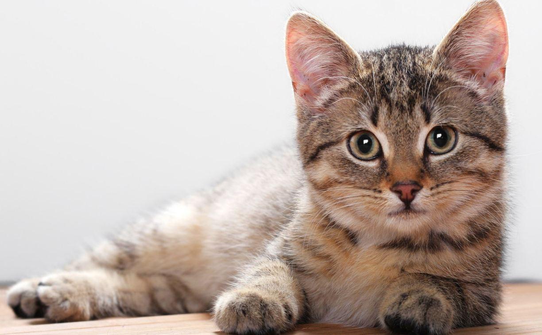 شما برای گربهتان چگونه موجودی هستید؟