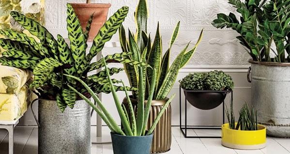 گیاهانی برای داشتن هوایی پاک و سالمتر در محیط داخلی