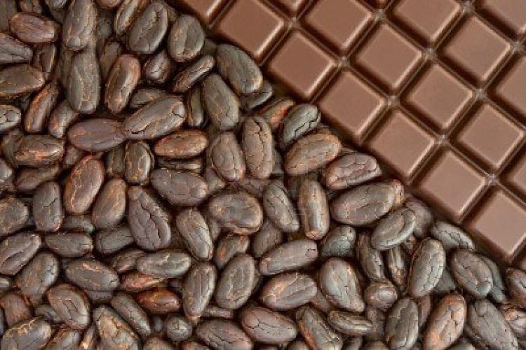 بحران کمبود کاکائو و جایگزینی احتمالی برای آن: انبه وحشی!