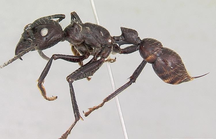 نیش کدام حشرات دردناکتر است؟